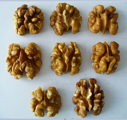 Natural Walnut kernel